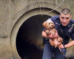 Police Officer Goes In Barefoot to Save a Runaway Puppy Who Got Stuck in a Tunnel
